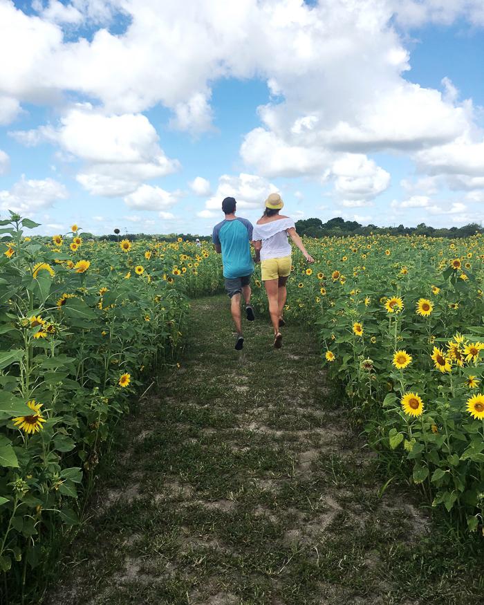 sunflower-maze-1-2