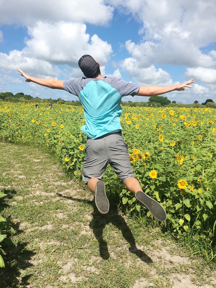 sunflower-maze-11