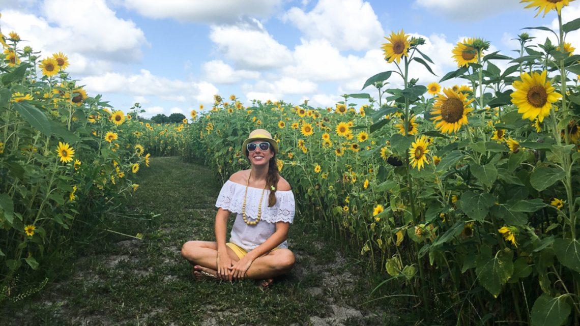 Florida Sunflower Maze