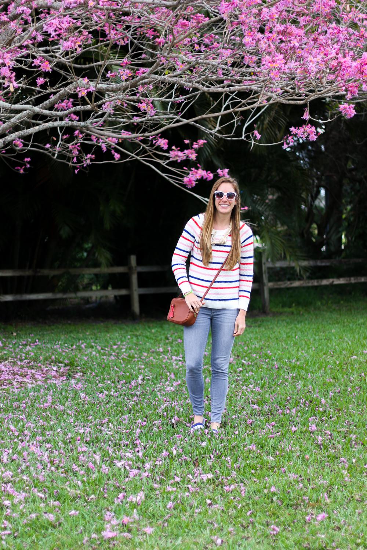 Pink_Dogwood_Tree-16