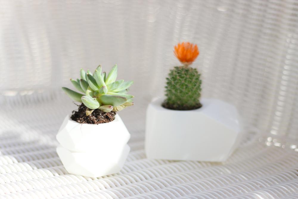 Shop Oak + Oats Succulent Planters