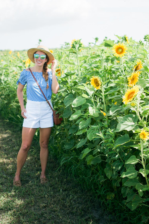 mims_sunflower_maze-16