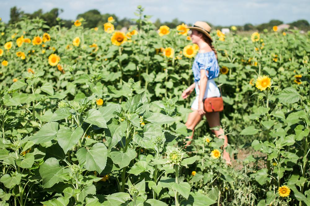 mims_sunflower_maze-36