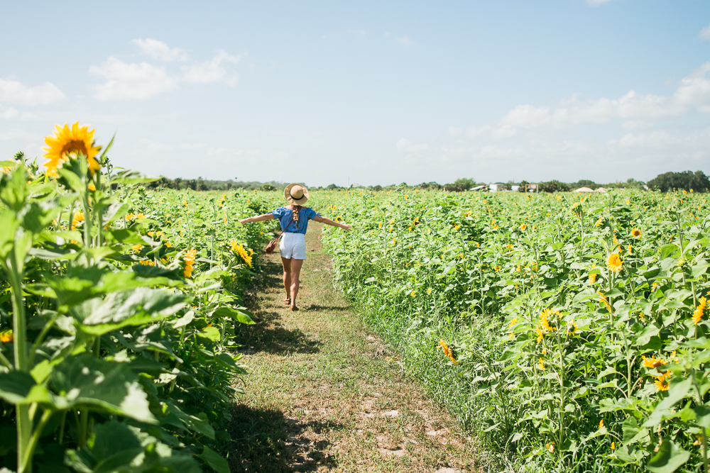 mims_sunflower_maze-7