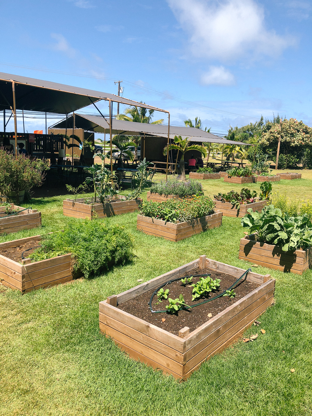 The Ultimate Oahu Travel Guide for the Adventurer - Kahuku Farms Oahu North Shore | Sunshine Style